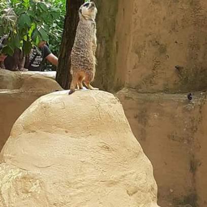 EFOP-2019_08_24-Kirándulás pécsi állatkert